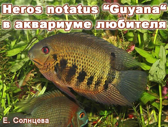 www.israquarium.co.il